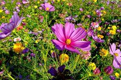 ... Sommerblumenbeet ...