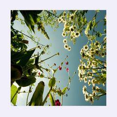 Sommerblumenbild