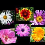 Sommerblumencollage