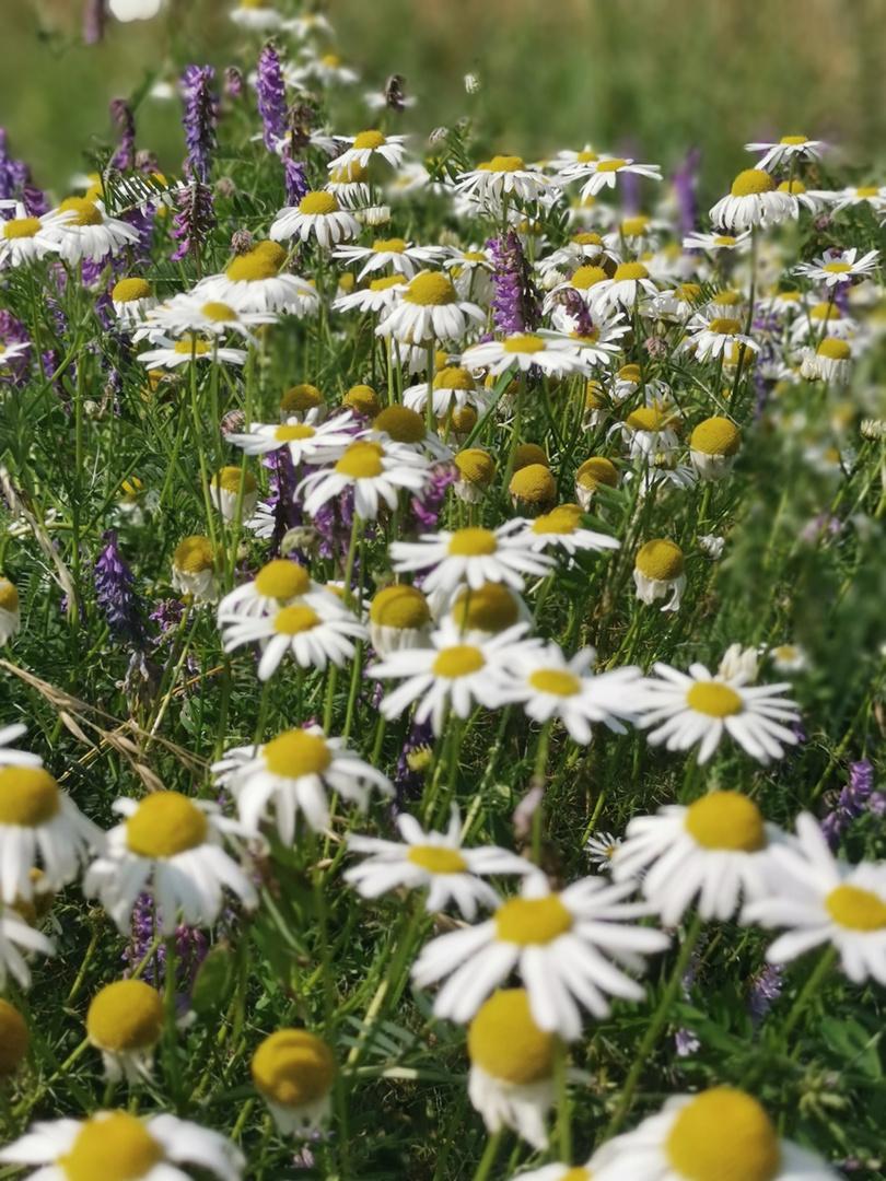 Sommerblumenmedley