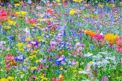 *** Sommerblumenwiesenchaous ***