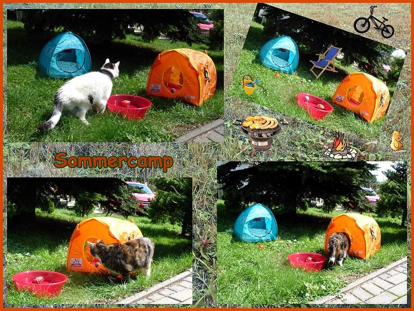 Sommercamp bei Wiezorek's
