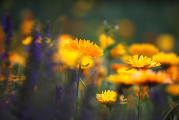 Sommerfarben im Blumenbeet