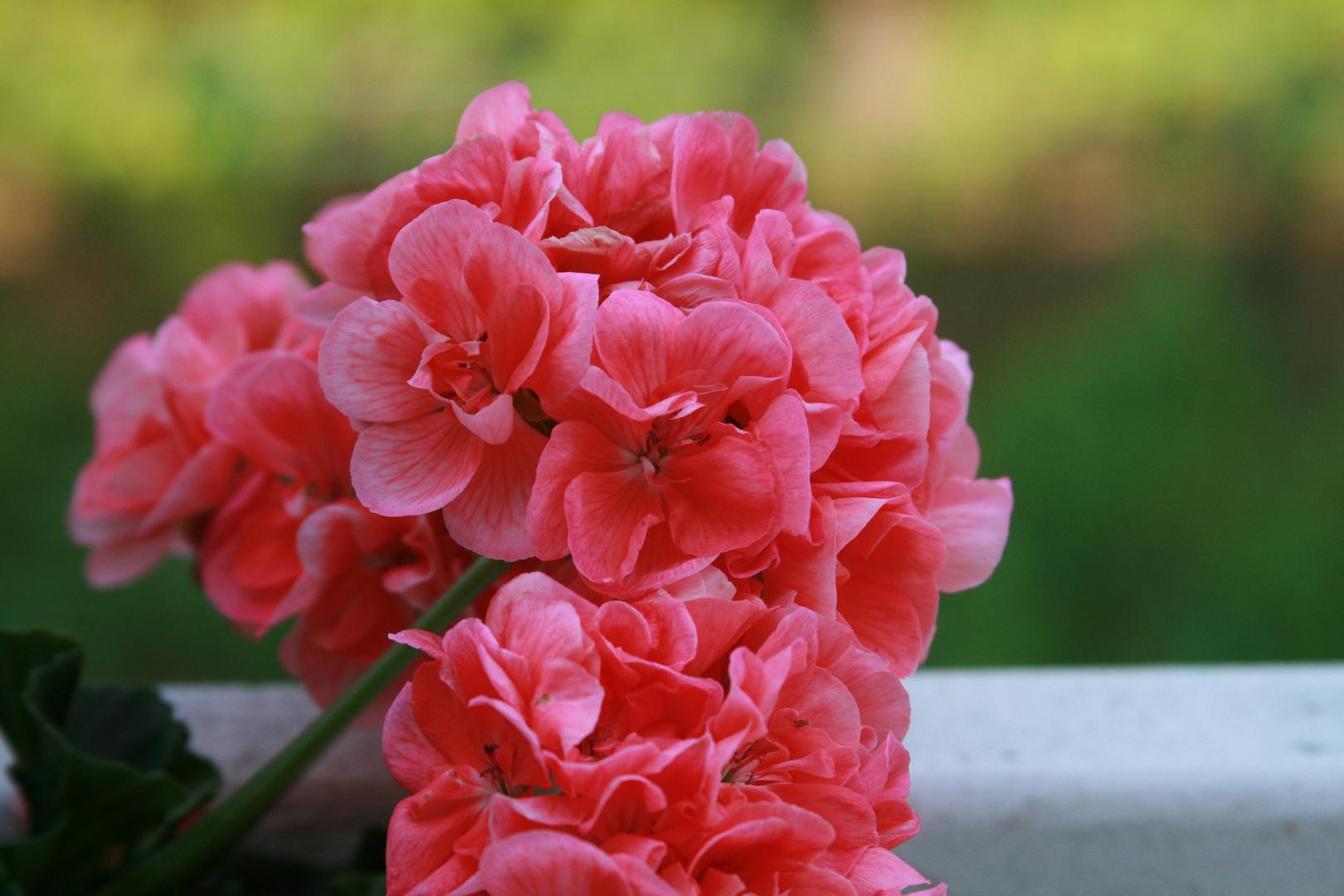 Sommerfarben- klar und deutlich