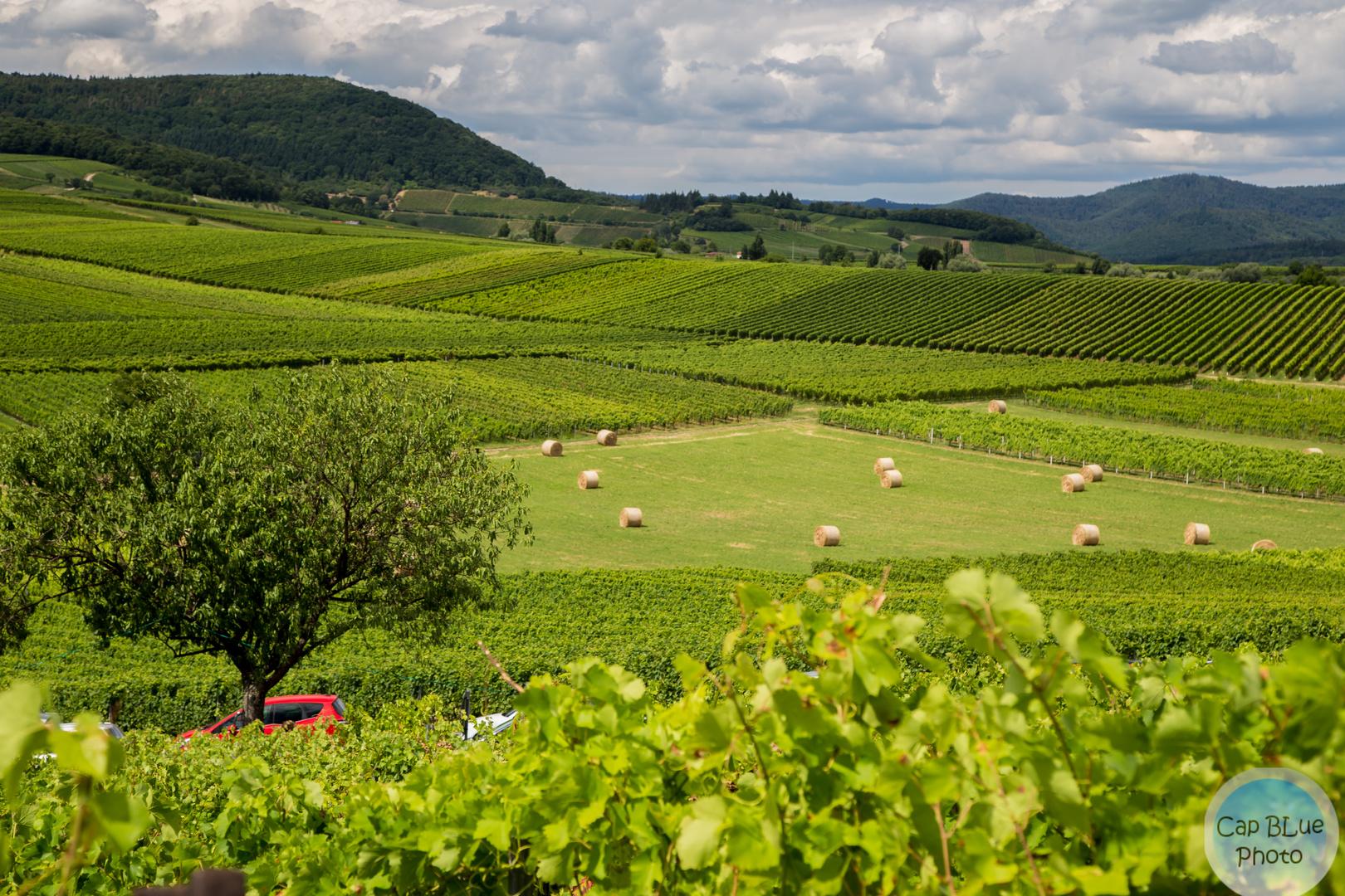 Sommerfeeling auf der kleinen Kalmit mit Blick auf die Weinberge