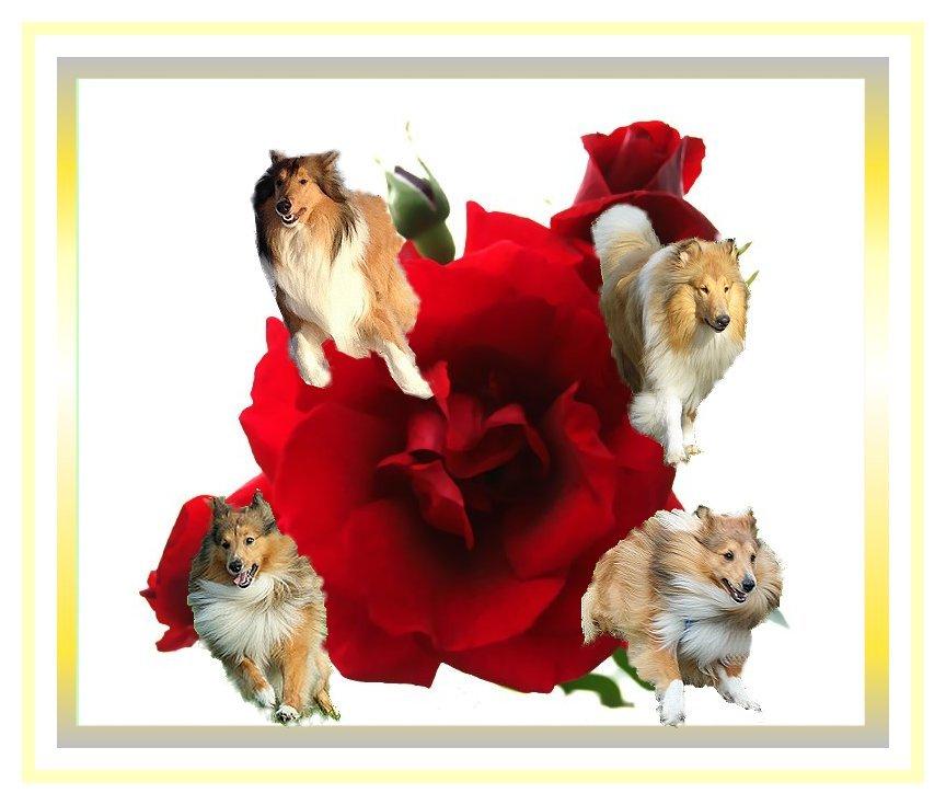 Sommergrüsse Comming up roses