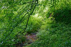 Sommerimpressionen am Waldbach
