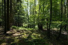Sommerimpressionen im Wald