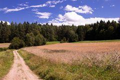 Sommerlandschaft