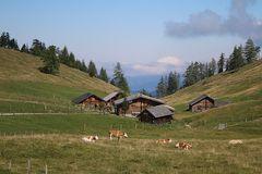 Sommerliche Bauernhof