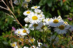 Sommerliche Blumenpracht