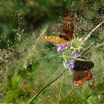 Sommerliche Hochmoorwiese