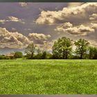 Sommerliches Feilnbacher Moor (Sterntaler Filze)