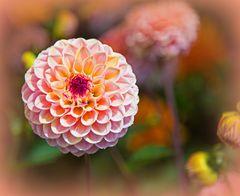 Sommerliches Mittwochsblümchen