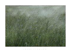 Sommernest_3 nach einem Regen +: