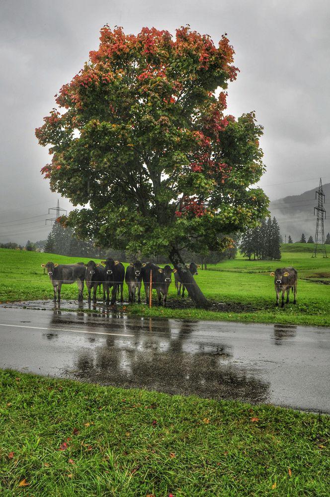 SommerregenSPIEGEL