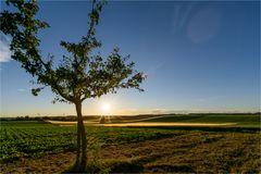 Sommersonne in den Böckinger Feldern