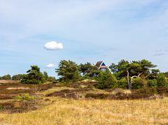 Sommerträume Hiddensee (11)