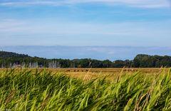 Sommerträume Hiddensee (12)
