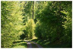 Sommerwald... - wie ihn die Deutschen lieben...