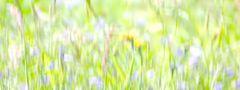 Sommerwiese abstrakt