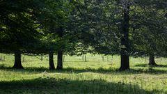 Sommerwiese bei Bayrischzell