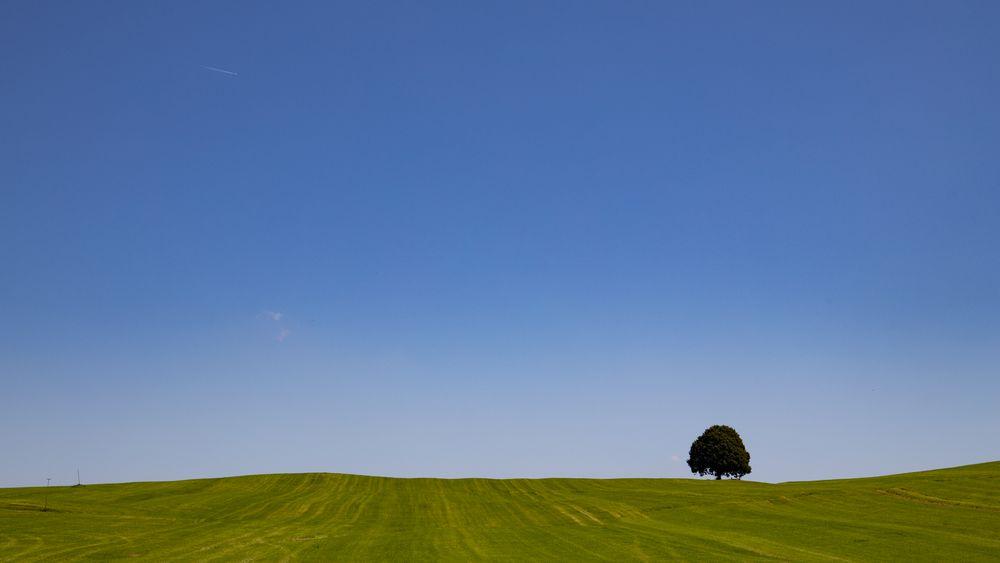 Sommerwiese  bei Irschenberg