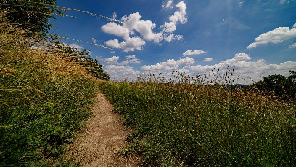Sommerwiese bei Langenberg