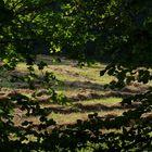 Sommerwiese im Wald