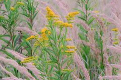 Sommerwiese-im-Wald