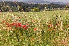 Sommerwiese in Warth-Weiningen TG