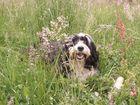Sommerwiese mit Hund
