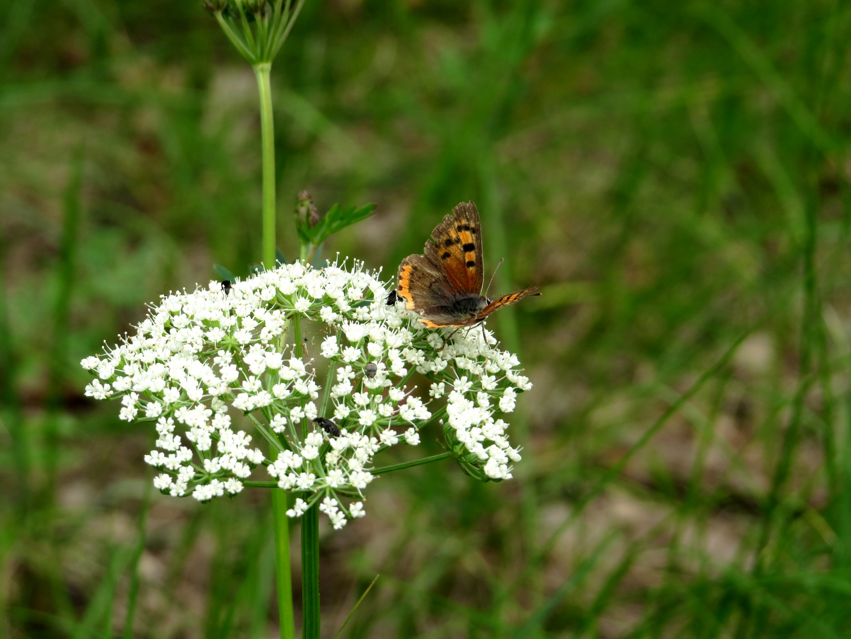 "Sommerwiese- ""Schmetterling macht Laune"""