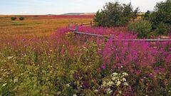 Sommerwiesen im böhmischen Osterzgebirge, wobei.... ich den  Grund...