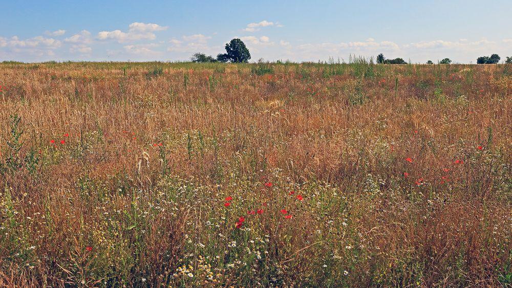 """""""Sommerwiesenfeld"""" vom feinsten und hier ist mein unten angezeigtes Objektiv..."""