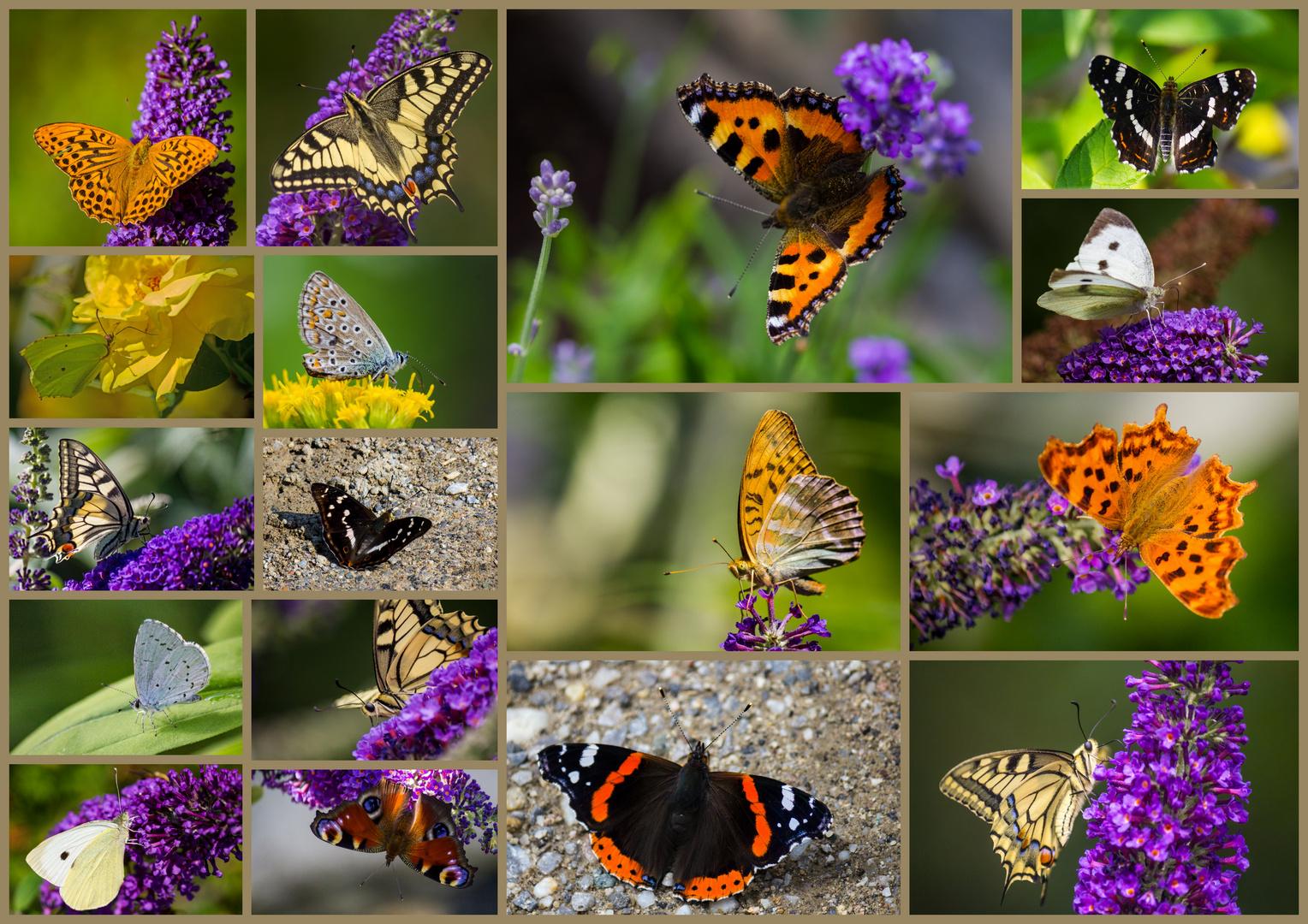 Sommerzeit = Schmetterlingszeit