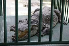 Sone Krokodilzunge fuehlt sich schon ulkig an . . .