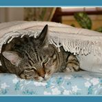 Soneca.... in blu per Misha!
