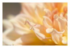 Song of flower-5