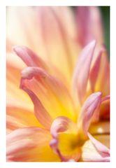 Song of flower-6