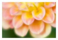 Song of flower-7