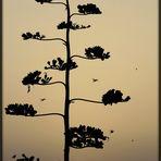 Sonne - Agave - Taube / sole - agave - piccione (2-b)