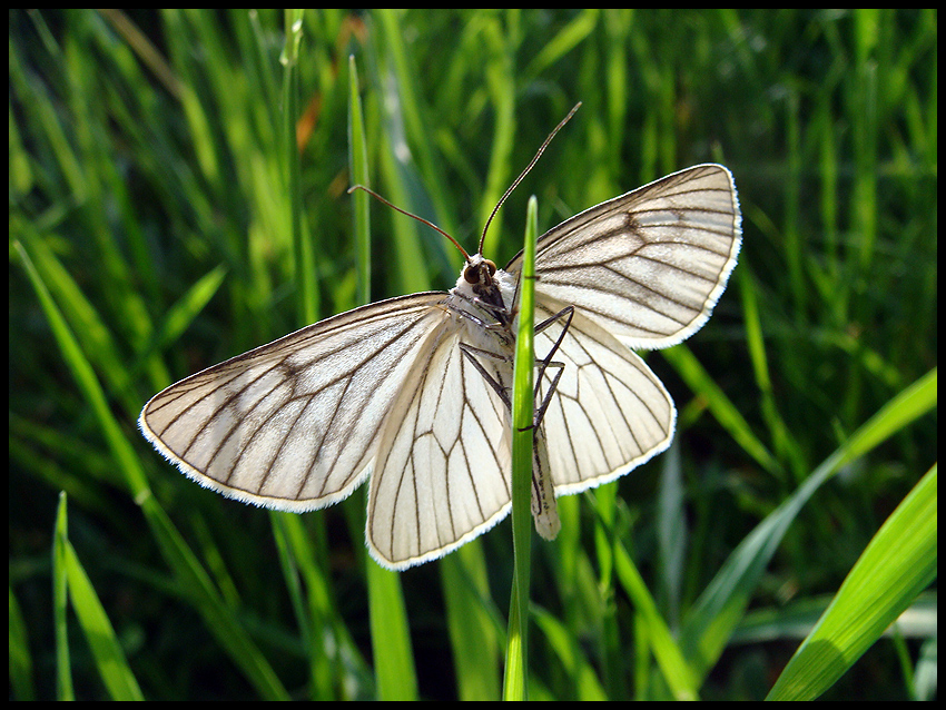 Sonne auf den Flügeln