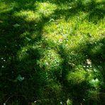 Sonne  auf Sommerwiesen oder die Farbe Grün