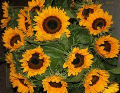 Sonne aus der Vase
