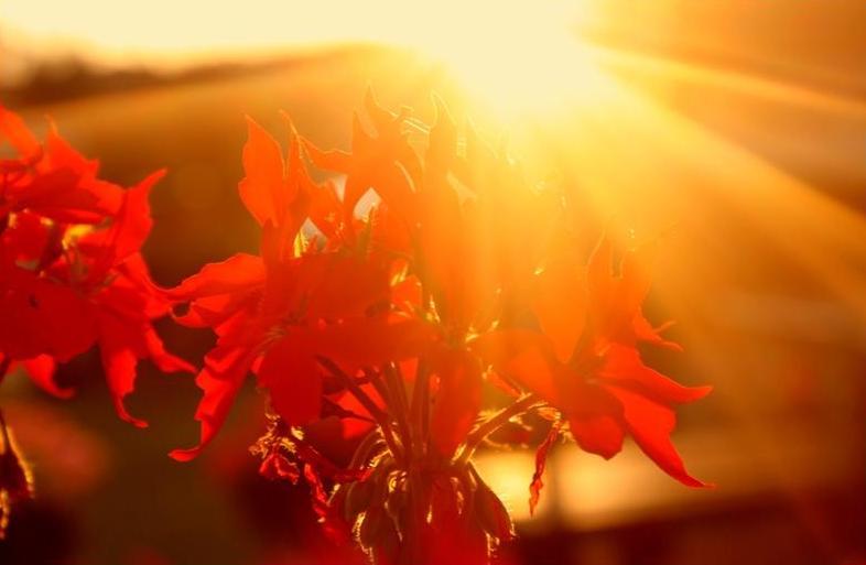 Sonne- Blume.