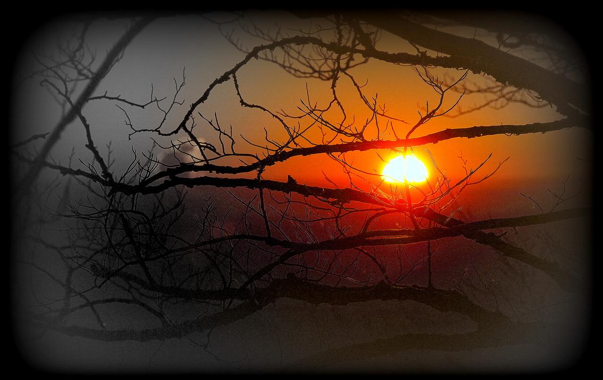 Sonne durchs Geäst