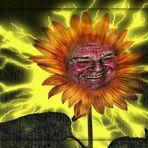 Sonne für Undine