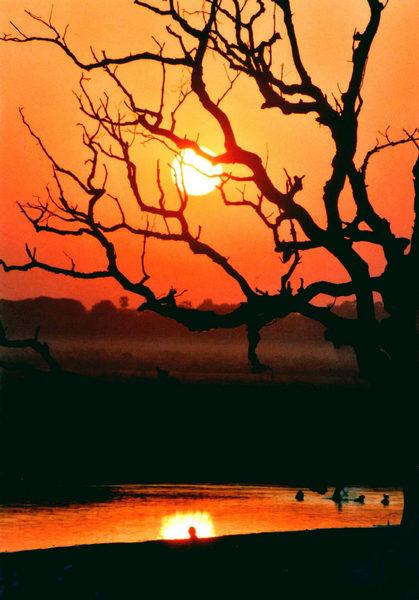 Sonne hinter Baum-siehe Bild mit Vogelschwarm