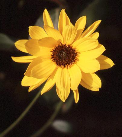 Sonne im Garten
